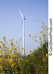 yellow rapeseed and wind turbine against blue sky