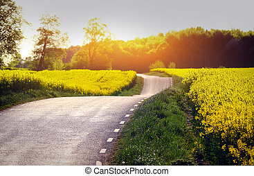 Yellow rapeseed field in sunset