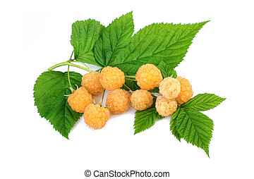 Yellow raspberry on white