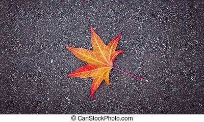 Yellow-red leaf of the tree lies on the gray textured asphalt.