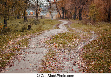 yellow-red, style, retro, paysage, forêt, automne, bouleaux, sentier