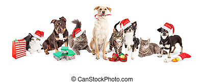 Christmas theme image of a large group of cats and dogs together
