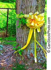 Yellow Ribbon around Maple Tree - Yellow Ribbon tied around...