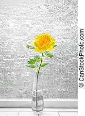 Yellow rose in a window