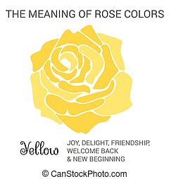 Yellow rose infographics, vector illustration isolated on...