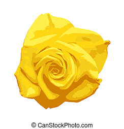 Yellow rose isolated on a white background. A rose is a woody perennial flowering plant of the genus Rosa, in the family Rosaceae, or the flower it bears