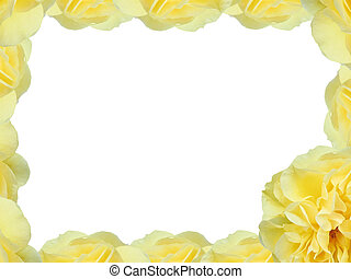 Yellow Rose - Yellow rose border