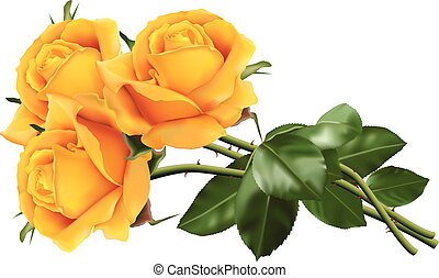Yellow roses - Three beautiful yellow roses isolated on the...