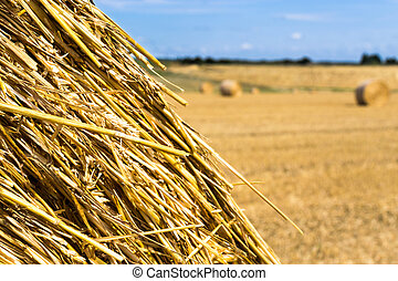 Yellow Round Straw Bale Close Up