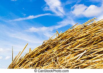 Yellow Round Straw Bale Close Up