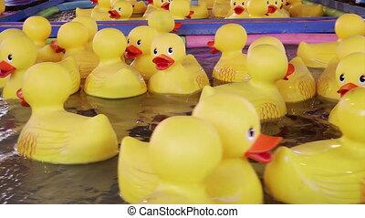 Yellow rubber ducks floating - Yellow rubber ducks, carnival...
