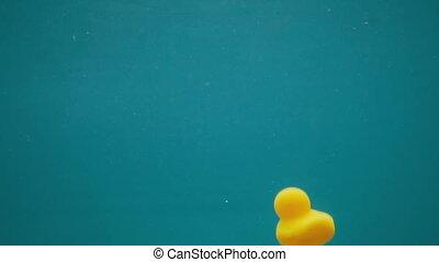 Yellow rubber ducks underwater - Beautiful shot of yellow...