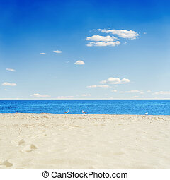 yellow sand and blue sea under sky with clouds. seagulls on the beach