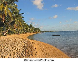 Yellow sand beach with palm trees, Nosy Boraha, Sainte, ...