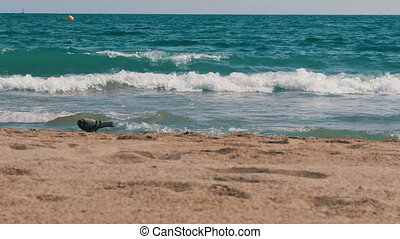 Yellow sand on background of blue waves of the Mediterranean...