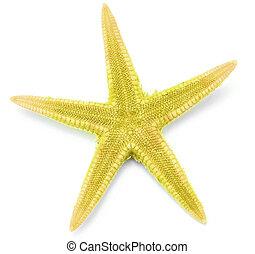 Yellow seastar, isolated on white background.