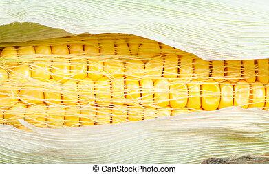 yellow seeds in ripe ear of corn