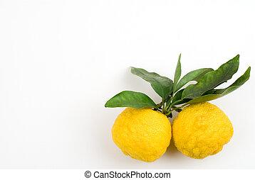 Yellow small citrus (Yuzu) on a white background