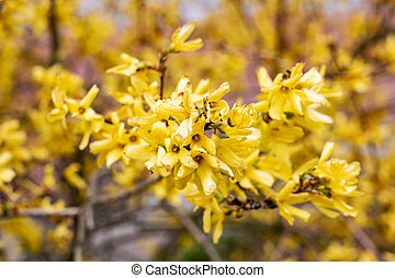 Yellow small leaves on the branches of a bush