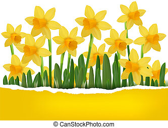 Yellow spring flower background with ripped paper Vector...