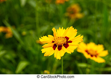 Yellow spring flower on a green background