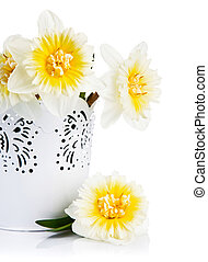Yellow spring flowers in bucket