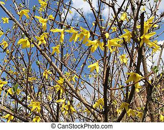 Yellow spring flowers on a tree bra