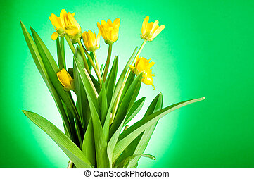 Yellow spring flowers with green leaves on a green background