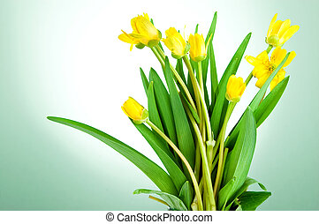 Yellow spring flowers with green leaves on a lettuce background