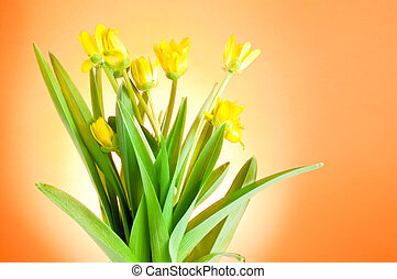 Yellow spring flowers with green leaves on a Orange background