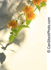 Yellow Spring flowers with shadows, floral background