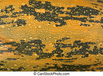 Yellow squash skin texture. Agricultural background.