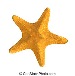 yellow starfish isolated on white