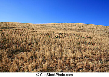 Yellow steppe - Hill covered of yellow grass under clear ...