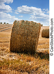 Yellow straw bale of hay in the stubble field under a blue sky with clouds