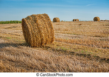 Yellow straw bales of hay in the stubble field under a blue sky