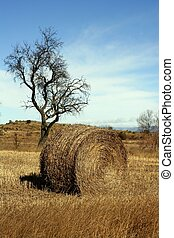Yellow straw round bale in the fields, Spain - Yellow straw ...