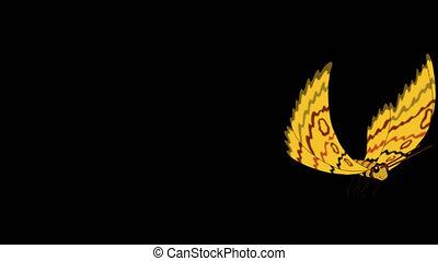 Yellow striped butterfly flies alpha