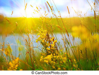 yellow summer flowers at meadow