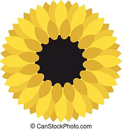 Yellow sunflower close-up isolated