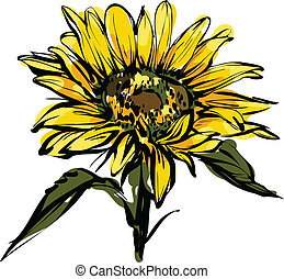 yellow sunflower design - a beautiful color picture yellow...