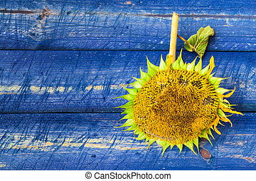 yellow sunflower painted fence