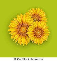 Yellow Sunflowers Summer Background