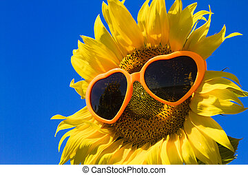 Yellow Sunflowers with Heart Sunglasses - Large open yellow ...