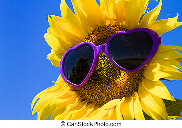 Yellow Sunflowers with Heart Sunglasses - Giant open yellow...