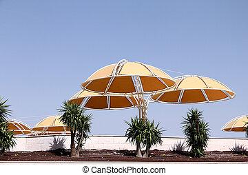 Yellow sunshades on the beach