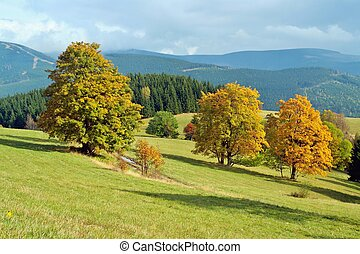 Yellow timber in autumn landscape