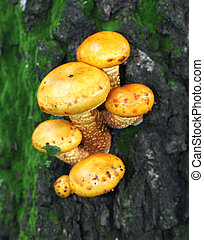 Yellow toadstool mushrooms on a tree