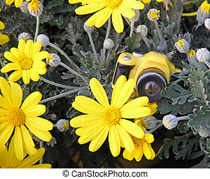 toy camera among the large yellow daisies - yellow toy...