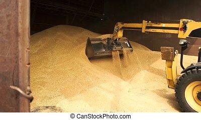Yellow tracktor uploading grain in bucket. Excavator is...